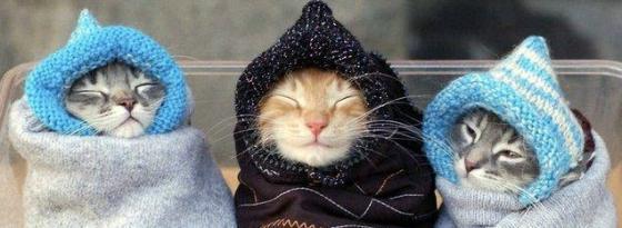 好冷的天气啊